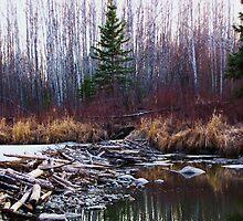 Alberta Beaver Dam by Luana Juknies