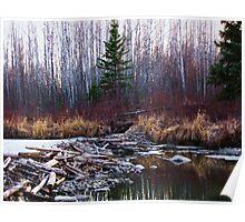 Alberta Beaver Dam Poster