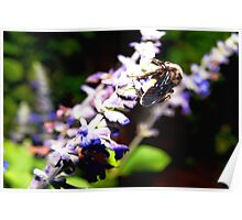 Bee on flower stalk Poster
