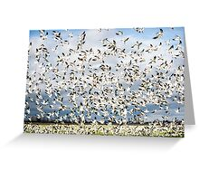 Snow Geese - The Take Off! Greeting Card