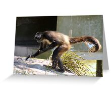 Monkey take away food Greeting Card