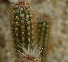 Triple prickle by Coreena Vieth