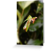 Natures Bow Greeting Card