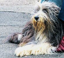 A Shaggy Dog Story by lynn carter