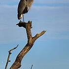 Blue Heron On the Watch  by Don Siebel