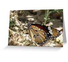 Dry Beauty Greeting Card