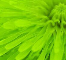 Bright Lime Green Wall Art by Natalie Kinnear