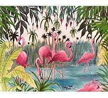 Flamingo Haven Tropical Birds Art Cathy Peek Art Photographic Print