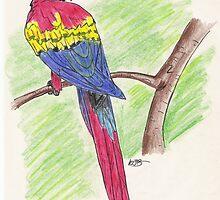 Scarlet Macaw by bluemagic
