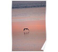 Bird at sundown Poster