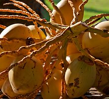 Bunch of coconuts seen in Candidasa, Bali, Indonesia by Michael Brewer