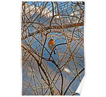 finch down by the lake in front of snowy mountains Poster