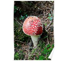 Fliegepilze 1/Fly agaric toadstool Poster