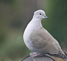 Pigeon Pose by missmoneypenny