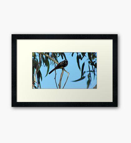 attune Framed Print