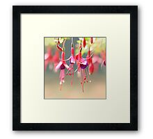 The Ballet Company ... Pink Fuchsia Flowers Framed Print