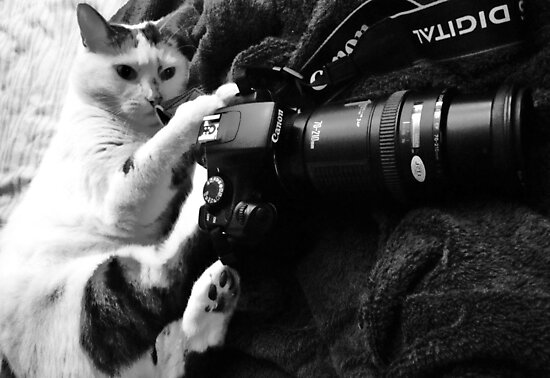 My Canon Cat by Ladymoose