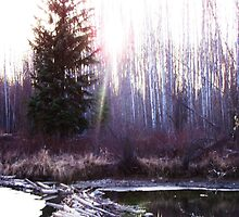 The Sun Shines over the Beaver Dam by Luana Juknies