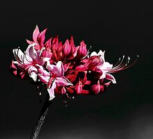 *Lone Azalea Stem* by Darlene Lankford Honeycutt