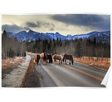 Horses on the road (HDR) Poster