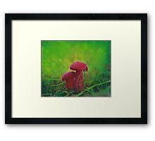 Mushrooms #3 Framed Print