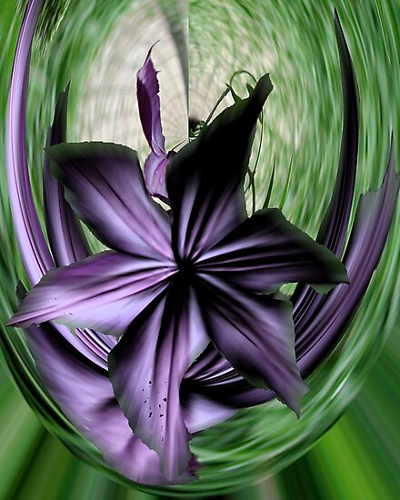 Purple Swoon by Barry Doherty