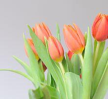 Tulips by astrolabio