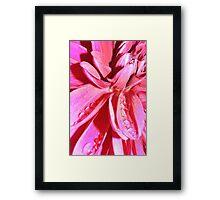 Colour Explosion Framed Print