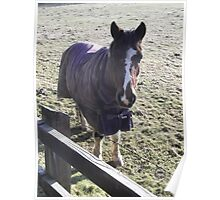 kingswood/surrey/horse in field (2) -(010212)- digital photo Poster