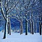 Snow Blown Trees. by Paul Richards