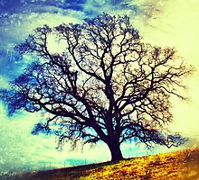 Oak tree in San Ramon, California by Dan Fitzpatrick