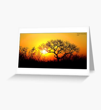 Kruger Park Sunset Greeting Card