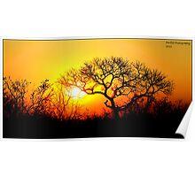 Kruger Park Sunset Poster