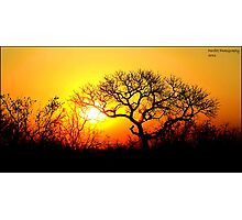 Kruger Park Sunset Photographic Print