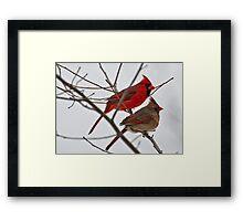 Male and Female Cardinal  Framed Print