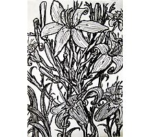 drawing of lillies Photographic Print