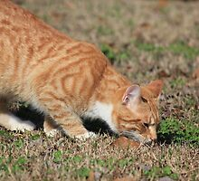 I Can Track Just as Well as Any Old Hunting Dog by DebbieCHayes