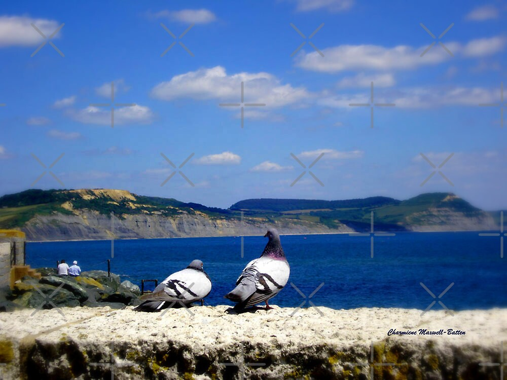 Pigeons looking out to Sea by Charmiene Maxwell-Batten