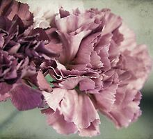 Mauve Carnation by Linda  Makiej