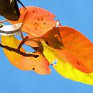 Autumn Leaves by Carolyn Wright