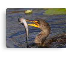 Double-crested Cormorant Fishing Canvas Print