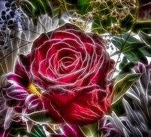 Red Rose by Nigel Butterfield