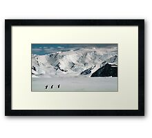 Adelie Penguins at Cape Hallett Framed Print