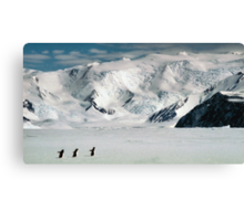 Adelie Penguins at Cape Hallett Canvas Print