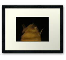 Bah Framed Print