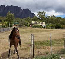 Horse in a Pasture with Mount Roland in the Background by Robert Stephens