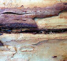 Natures Own Work - 13 by Angela Gannicott