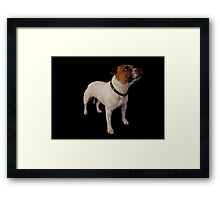 Gizmo (Seenworstaff Stand By Me) Framed Print
