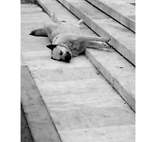Athens Sleeping Dog #2 Photographic Print