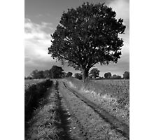 Tree, Field, Lane Photographic Print